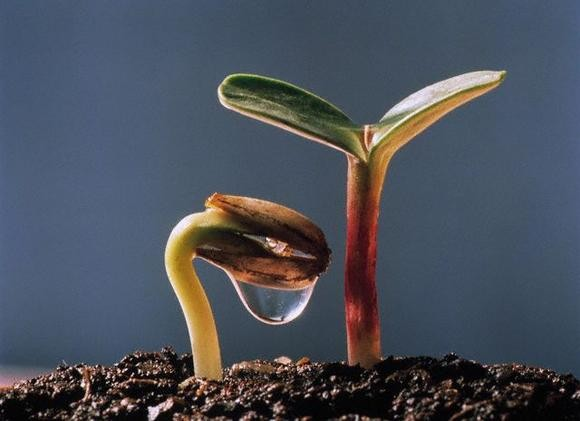 Духовный и личностный рост